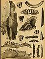 Die Pithecanthropus-Schichten auf Java. Geologische und paläontologische Ergebnisse der Trinil-Expedition (1907 und 1908), ausgeführt mit Unterstützung der Akademischen Jubiläumsstiftung der Stadt (20932032112).jpg