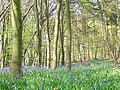 Dipple Wood - geograph.org.uk - 162743.jpg