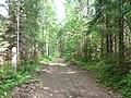 Dobryanskiy r-n, Permskiy kray, Russia - panoramio (246).jpg