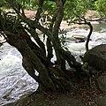 Dom Pradit, Nam Yuen District, Ubon Ratchathani, Thailand - panoramio (5).jpg