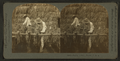 Drying tobacco, Florida U.S.A, from Robert N. Dennis collection of stereoscopic views.png