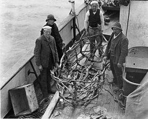 Dundonald (ship) - K Knudsen, Michael Puhl, Robert Ellis an John Gratton on board the Hinemoa alongside a wooden frame of what had been a canvas boat (coracle)