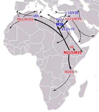 Haplogroup E-M215 (Y-DNA) - Image: E1b 1b Route