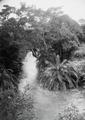 ETH-BIB-Bachvegetation am Makungu-River-Kilimanjaroflug 1929-30-LBS MH02-07-0460.tif