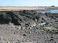 Earlsferry from coastal path near Kincraig Point - geograph.org.uk - 1801016.jpg