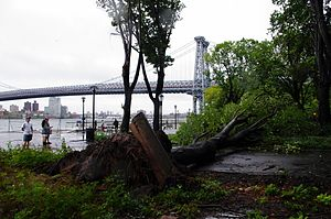 English: A downed tree in East River Park in M...