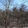 Elizabeth Township, PA, USA - panoramio (7).jpg