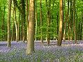 Embley Wood - geograph.org.uk - 800674.jpg