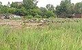 Empty Studebaker lot Piquette Avenue - Detroit Michigan.jpg