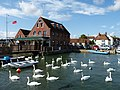Emsworth Sailing Club...A Siege of Swans. - panoramio.jpg