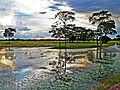 Entardecer no pantanal.JPG