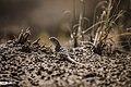 Eshtehard Desert 13960304 15.jpg