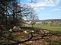 Ewes and lambs, Upper Vicarwood - geograph.org.uk - 1226231.jpg