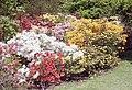 Exbury Gardens Colour - geograph.org.uk - 779056.jpg