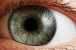 L'œil, une structure très complexe qui n'est pas due qu'au hasard