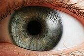 العين البشرية