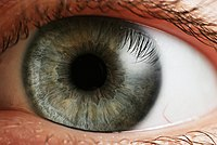 The human eye is the first element of a sensory system: in this case, vision, for the visual system. Eye iris.jpg