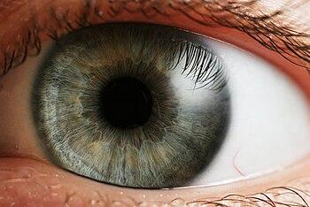 Human eye. Español: Iris de un ojo humano. El ...