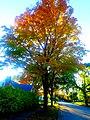Fall in Madison - panoramio (12).jpg