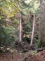 Fallen trees near Aira Force, Watermillock township, Matterdale - geograph.org.uk - 280217.jpg