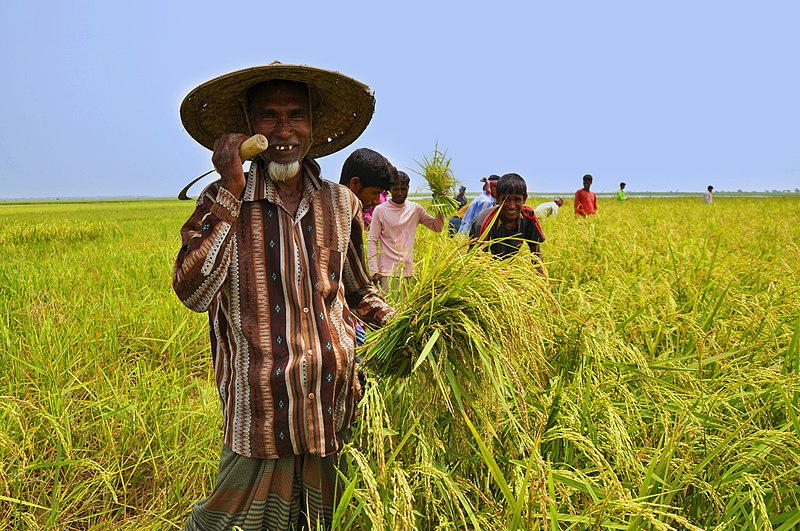 File:Farmer of Bangladesh.jpg