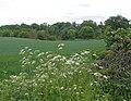 Farmland, Carrington - geograph.org.uk - 1345238.jpg