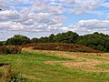 Farmland near Headley - geograph.org.uk - 29287.jpg