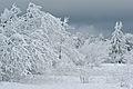 Feldberg Ice and Snow Trees.jpg