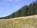 Field-woodland boundary - geograph.org.uk - 392529.jpg