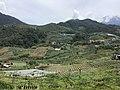 Field crops in Kundasang 03.jpg