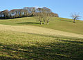 Field south of St Winnow.jpg