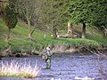 Fishing on the Camowen river, Omagh - geograph.org.uk - 147047.jpg