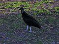 Flickr - archer10 (Dennis) - Guatemala-1338.jpg