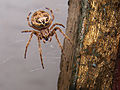 Flickr - paul bica - spider.jpg