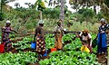 Flickr - usaid.africa - Maza Wanawake Kwanza Growers Association (1).jpg