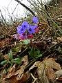 Flora 17 Slovakia2.jpg