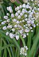 Flower1005.jpg