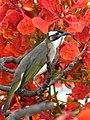 Flower Lover (14108040209).jpg