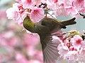 Flower Lover (15939512263).jpg