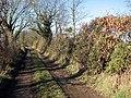 Flowering gorse in hedgerow - geograph.org.uk - 1151811.jpg