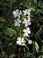 Flowers - Uncategorised Garden plants 141.JPG