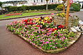 Flowers at Babbacombe Downs (6962).jpg