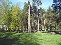 Fokinskiy rayon, Bryansk, Bryanskaya oblast', Russia - panoramio (102).jpg