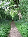 Footpath to Albourne Church - geograph.org.uk - 1299753.jpg