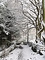 Footpath to Allenmills - geograph.org.uk - 648727.jpg