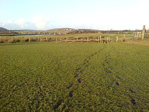 English: Footprints in the fields Although reg...