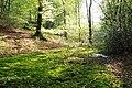 Forêt de Desvres Tourbière.jpg