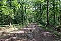 Forêt domaniale de Bois-d'Arcy 29.jpg