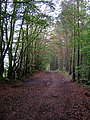 Forest Path in Chatelherault Country Park - geograph.org.uk - 261630.jpg
