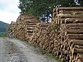 Forestry work - geograph.org.uk - 545271.jpg